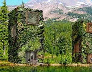 OAS1S, des cabanes comme des arbres
